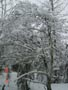 snowytrees2